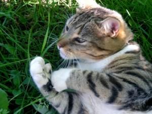 Le chat de Charles Baudelaire  dans POEME pollux-chat-harpiste-plus-belles-poses-animal-pendant-vacances_464010-300x225